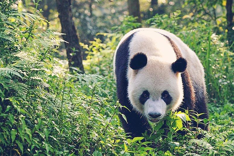 Pandas 3D: The Journey Home
